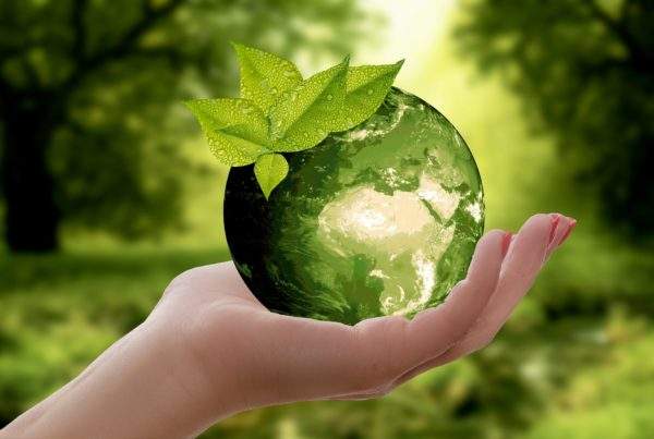 a hand holding a green globe symbolizing we need to refocus on recycling plastic packaging